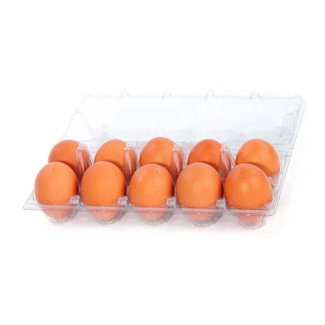 Yavrutamı Gezen Tavuk Yumurtası 10'lu