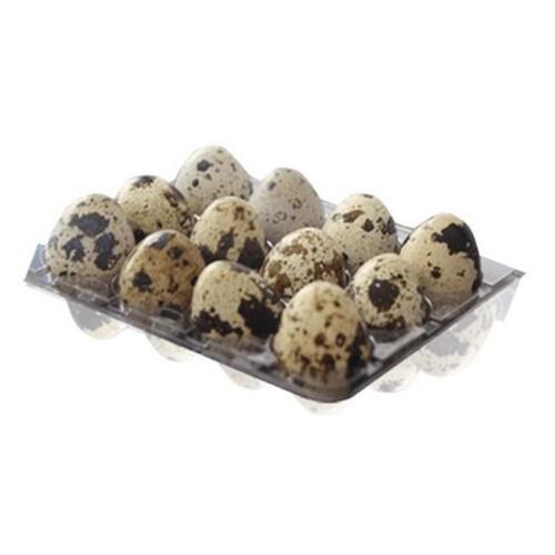 Ortar Bıldırcın Yumurtası 12lı